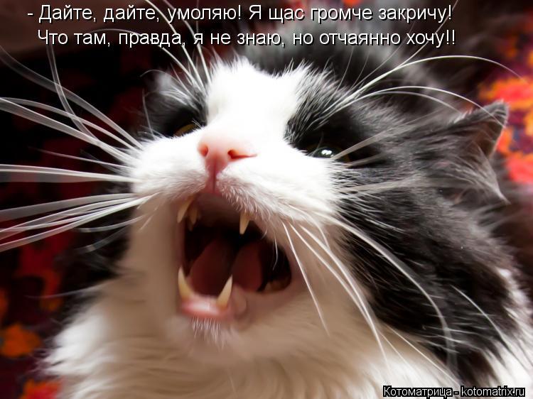 Котоматрица: - Дайте, дайте, умоляю! Я щас громче закричу! Что там, правда, я не знаю, но отчаянно хочу!!
