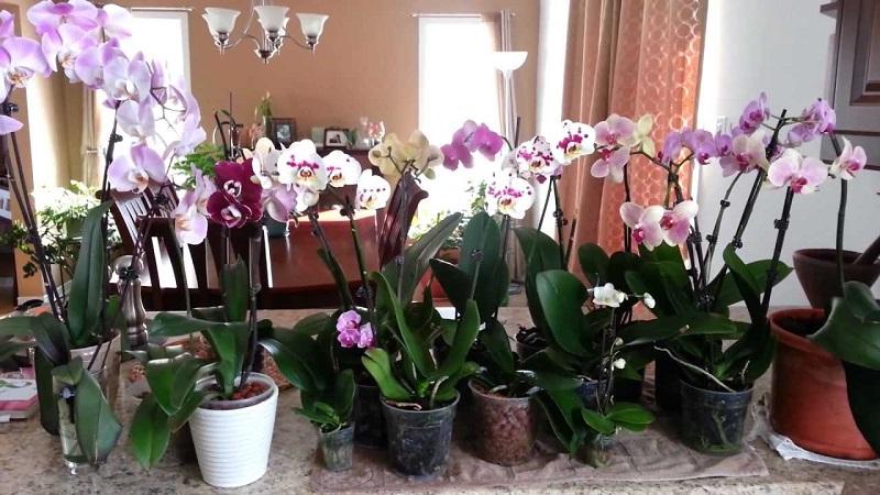 Мощный витаминный комплекс для орхидей! Через 10 дней дружно появятся цветоносы
