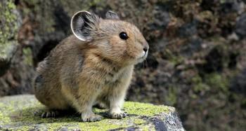 «Волшебного кролика» удалось снять на видео в Китае