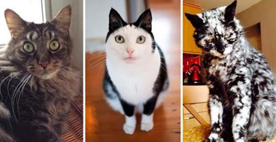 Кошки с необычным окрасом, которые обязательно подарят вам улыбку!
