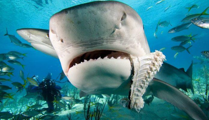Удивительно, но акулы боятся…