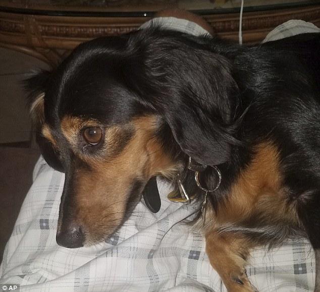 Маленький пес упал за борт во время шторма, но выжил и проплыл 3 мили до берега