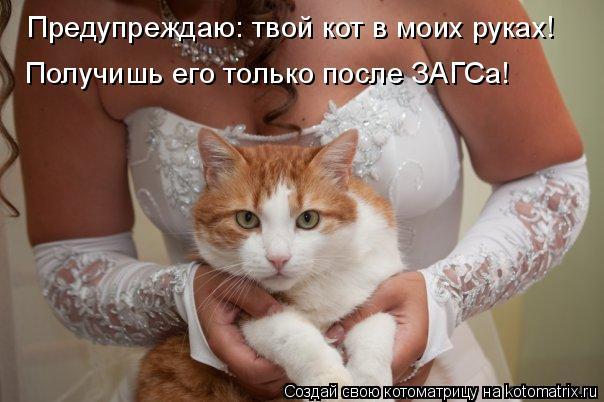 Котоматрица: Предупреждаю: твой кот в моих руках!  Получишь его только после ЗАГСа!