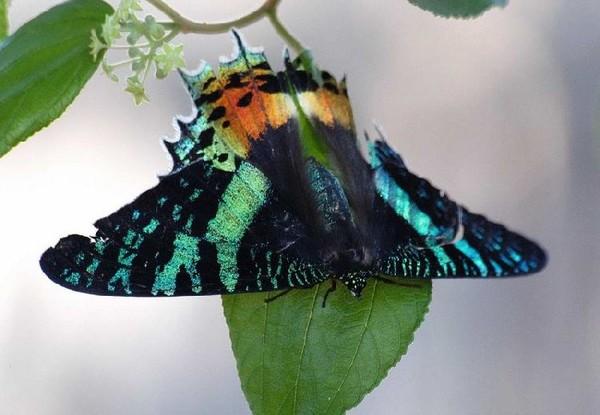 Самые красивые бабочки нашей планеты