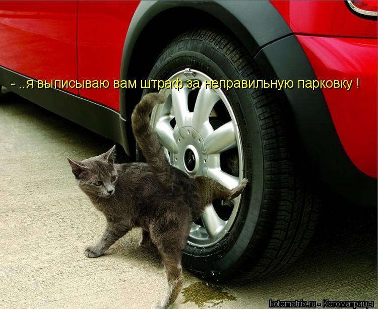 Котоматрица: - ..я выписываю вам штраф за неправильную парковку !