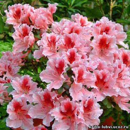 Цветов какие цветы подарить