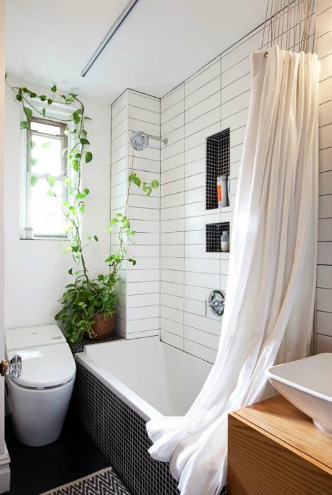 Растения в ванне.