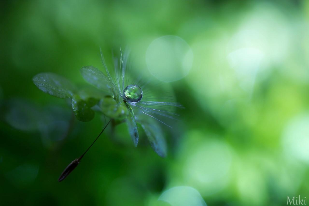 Фотография Green & Green автор Miki Asai на 500px