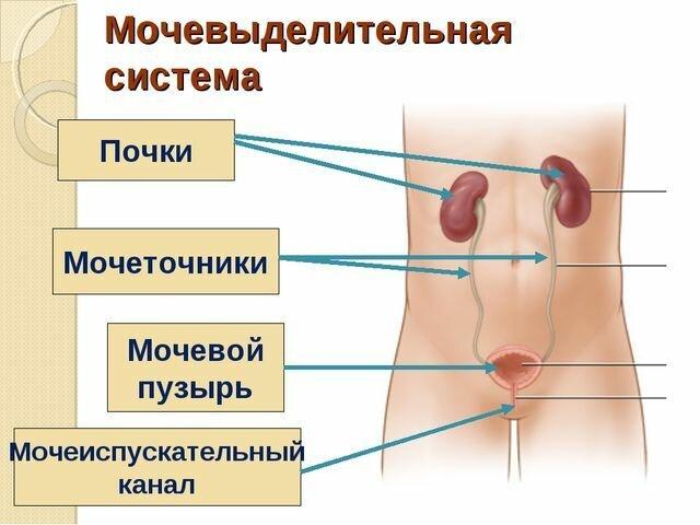Как работает человеческий организм-10 фото-