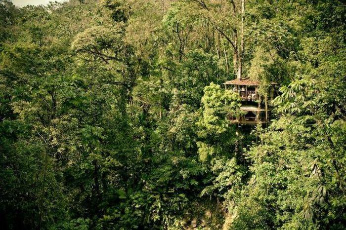 Деревня на деревьях - фото 17