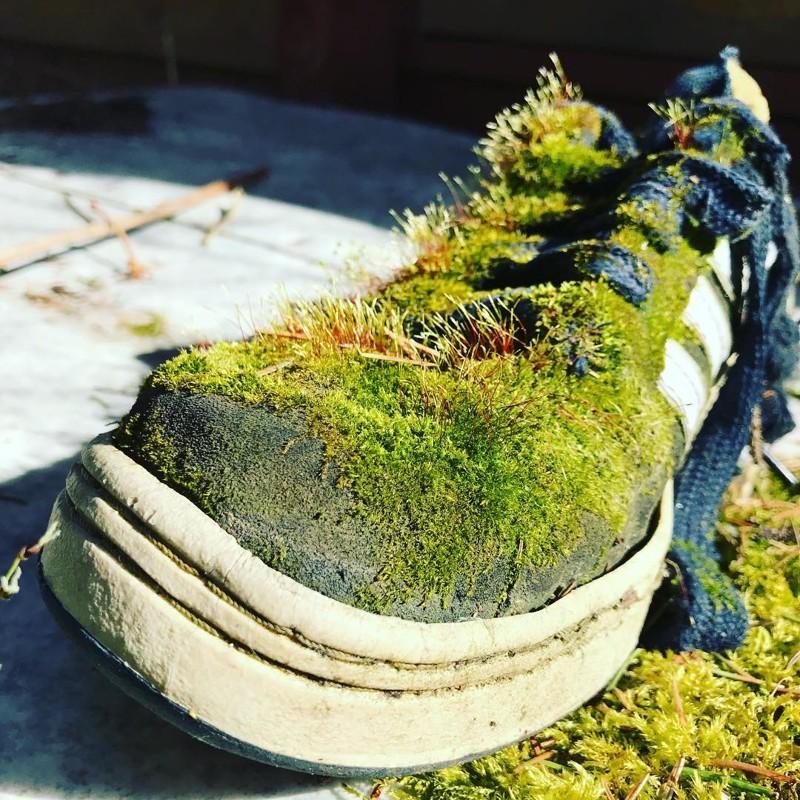 Кроссовок за несколько лет заброшенное, красиво, мир без людей, природа берет свое, фото, цивилизация