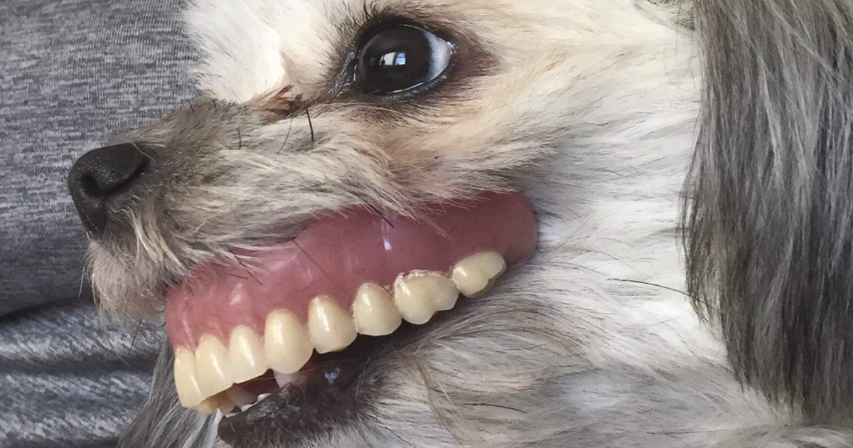Dog Steals Owner's Dentures While He Sleeps And Gets Adorable 'New Smile'