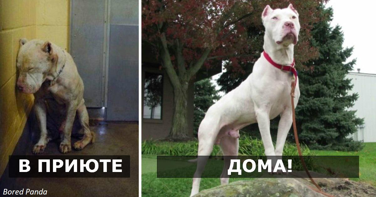 27 фото собак ″До″ и ″После″…