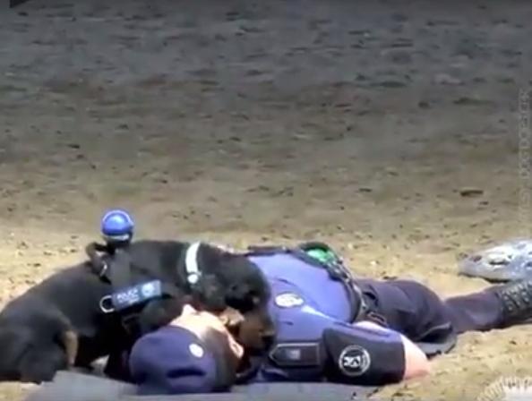 Как щенок попытался спасти п…