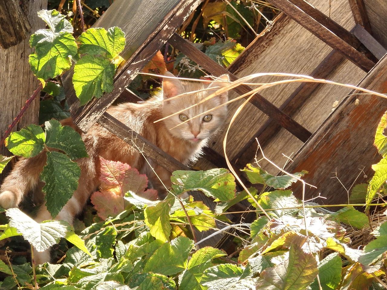 Кто-то бросил троих котят на остановке… Малышам было бы худо, но вмешалась добрая девушка!