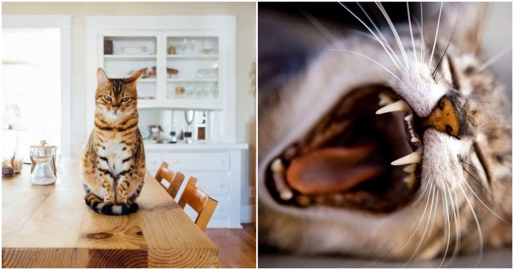 Ученые установили, что кошки – отражение личности владельца