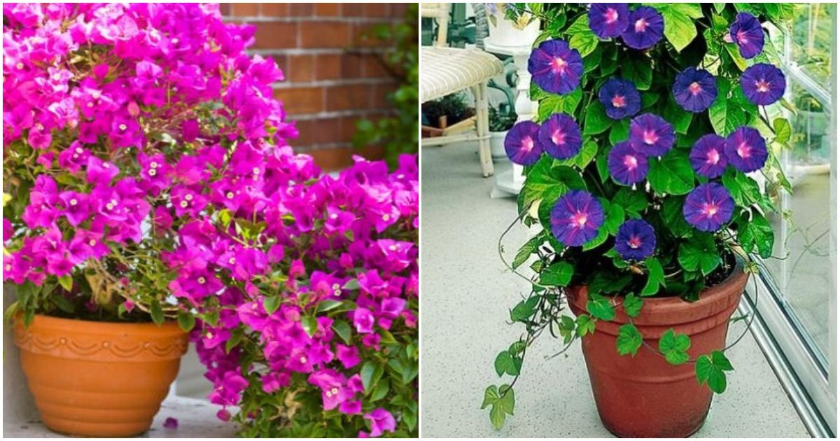 6 красивых вьющихся растений украсят ваш дом лучше любого декора