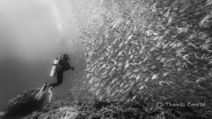 Подводный мир тоже прекрасен