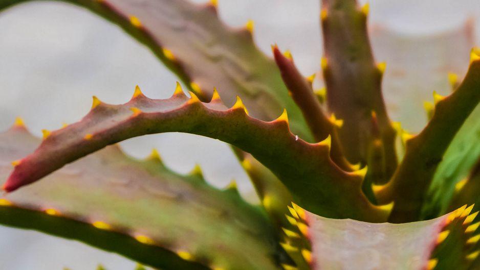 Эти бесполезные полезные растения
