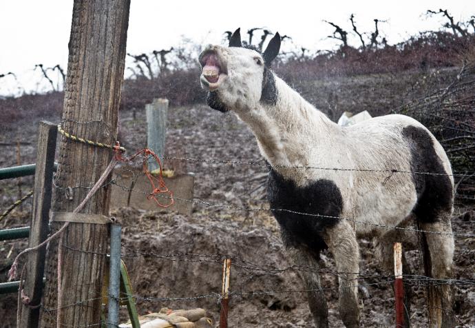 7 лошадей спасли на болоте, из-за колючей проволоки… Но главный узник был заперт в трейлере