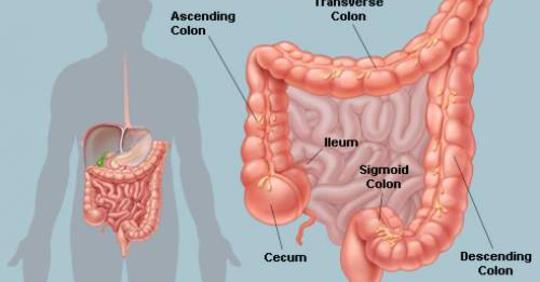 7 вещей, которые вам нужно знать о кишечнике