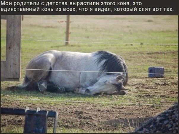 Кони тоже спят клубочком))