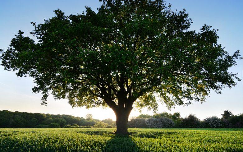 Из-за потепления деревья становятся высокими, но хрупкими