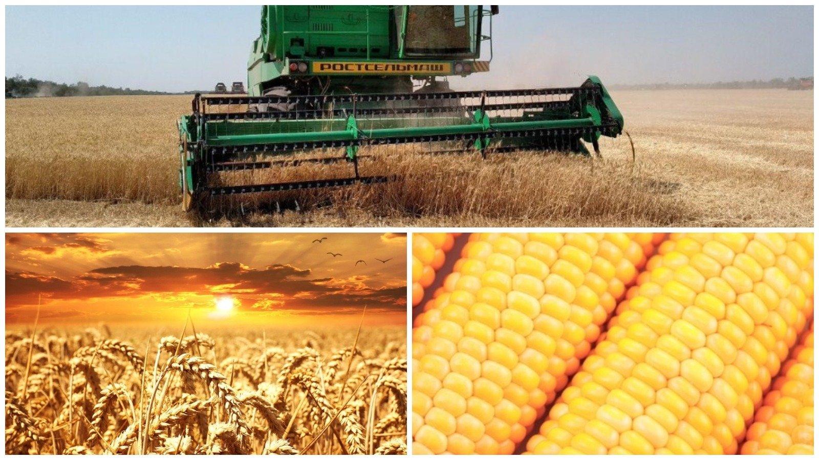 Россия и Африка формируют два «полюса возможностей» в сельском хозяйстве