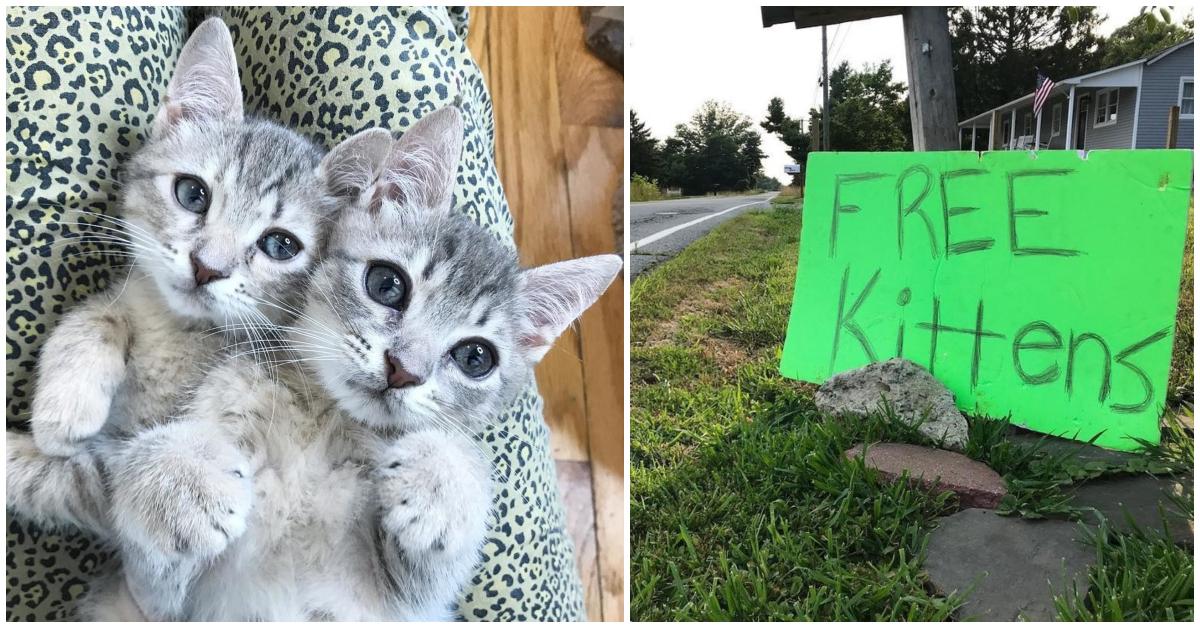 «Котята — бесплатно?» Кошачь…