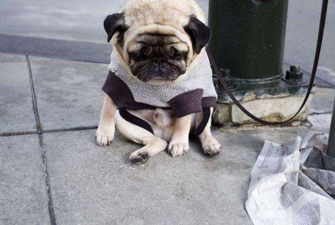 Обиженные собаки, которые навсегда потеряли доверие к своим владельцам