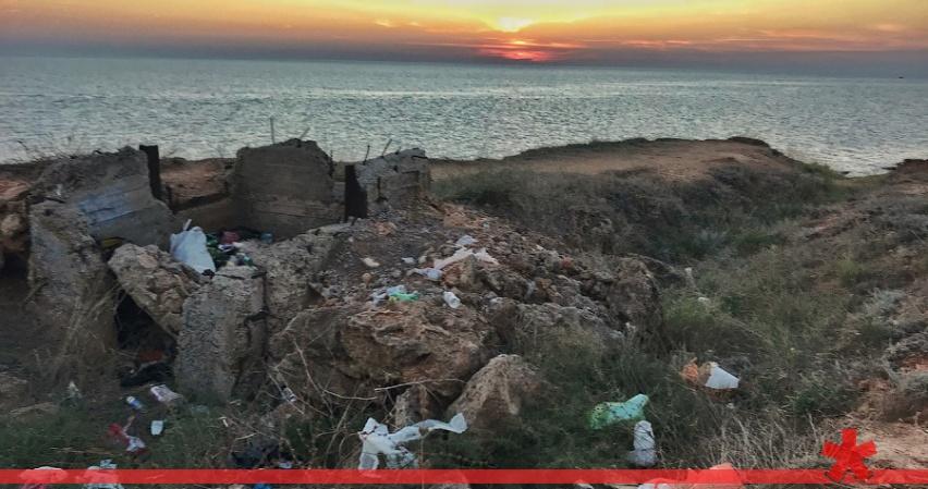 Понаехало свинотуристов в Крым