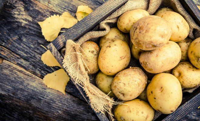 : Raw Organic Golden Potatoes in the Wooden Crate on Aged Wood Planks Table.