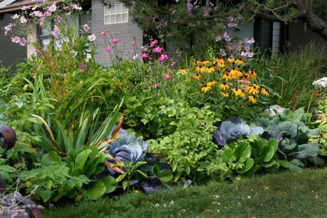 Контраст текстуры листьев различных декоративных растений в цветнике
