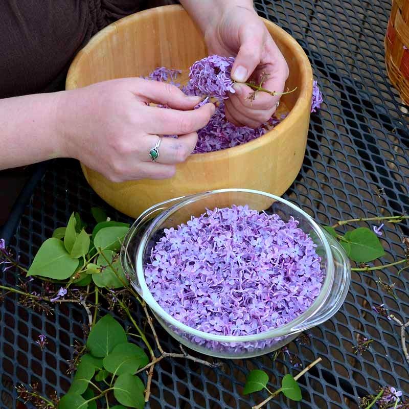 Пока цветет сирень, заполните банку растительным маслом и фиолетовыми цветками…