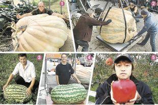 Зачем выращивают плоды-гиганты?