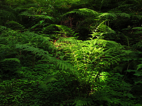 Снимки в лесу