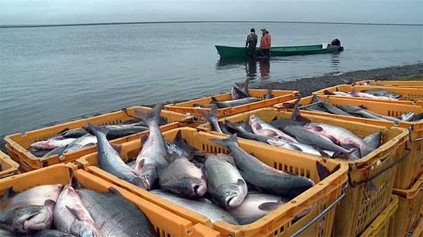 Любопытное об Азовском море…