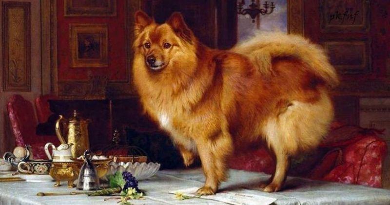 Жучка, Полкан и Тузик: как появились самые популярные в России собачьи клички