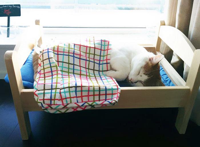 IKEA подарила приюту для животных кукольные кроватки, и кошкам они очень нравятся