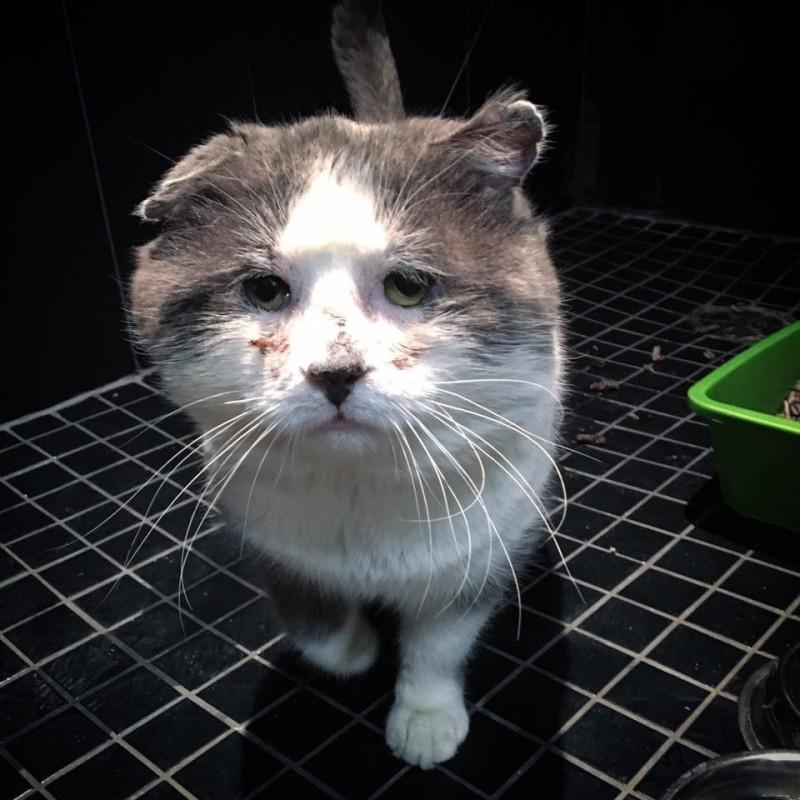Печальный кот наконец приходит в себя после шести лет жизни на улице