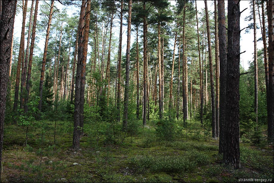 В июльском лесу