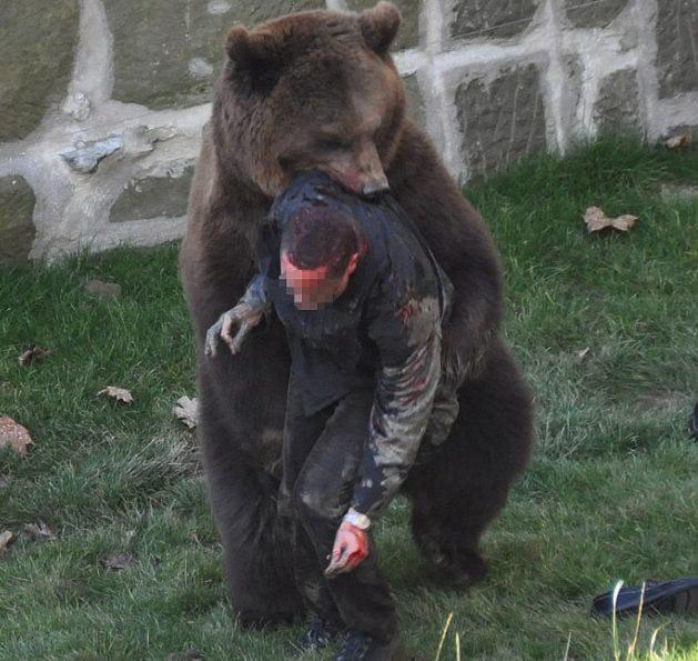 термобелье мужское нападение медведя на мужчину в парке берне марки