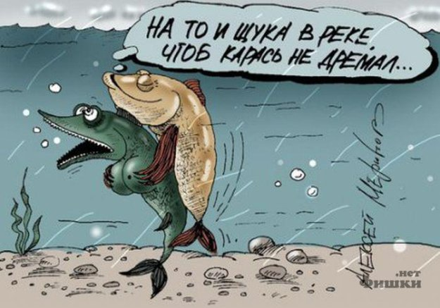 юмор о рыбалке на щуку