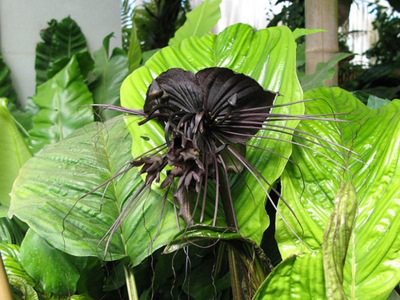 creepyplants25 Самые жуткие растения