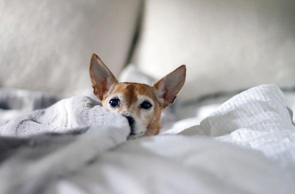 Стало известно, сколько российских отелей готовы принимать постояльцев с животными
