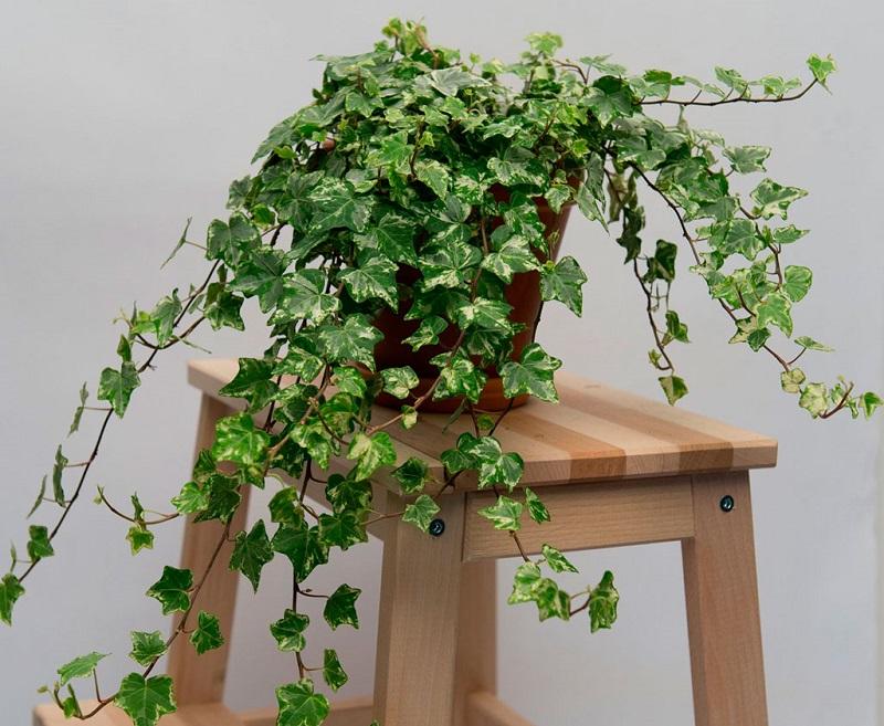 комнатные растения для благополучия семьи