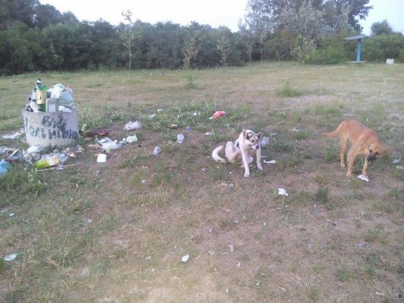 Новости европеизации: на заваленных мусором пляжах Херсонщины обнаружен возбудитель лептоспироза