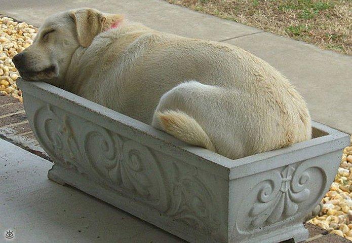 Весёлые позы спящих собак 15