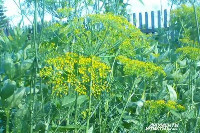 Даже сорняки ростом с забор, уверена Сухова, можно победить, если взяться за дело в первой половине июня.