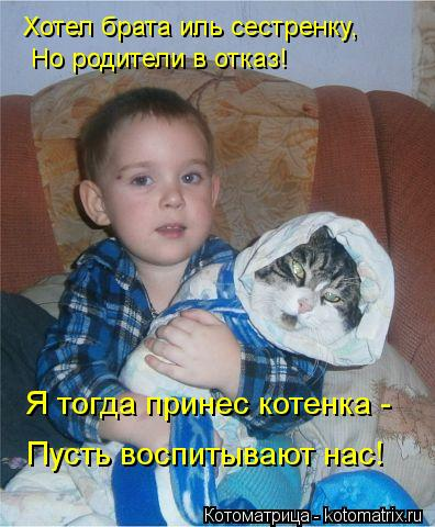 Котоматрица: Хотел брата иль сестренку, Но родители в отказ! Пусть воспитывают нас! Я тогда принес котенка -
